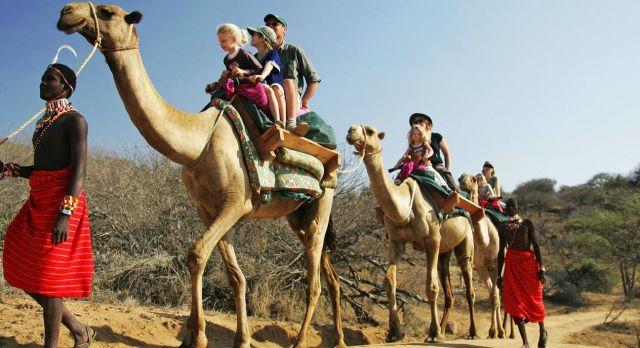 kamel safari