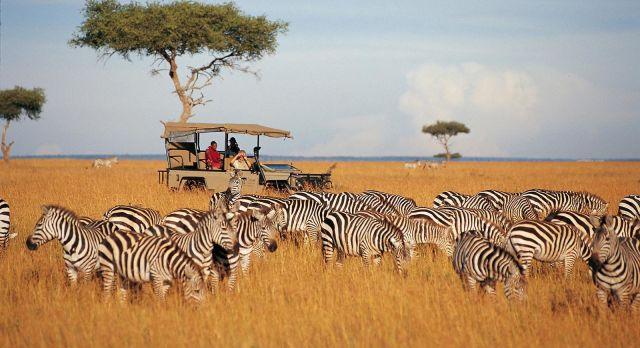 safari kenia2