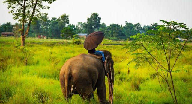 Im Chitwan-Nationalpark mit dem Regenschirm auf dem Rücken eines Elefanten