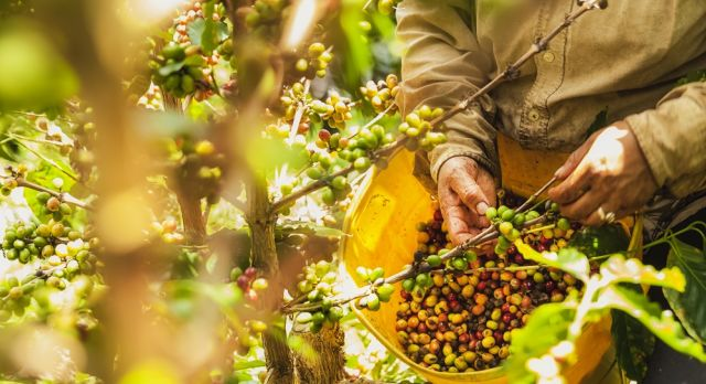 Enchanting Travels Colombia Tours Coffee