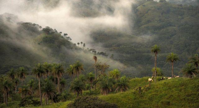 Cloud Forest in Monteverde Costa Rica