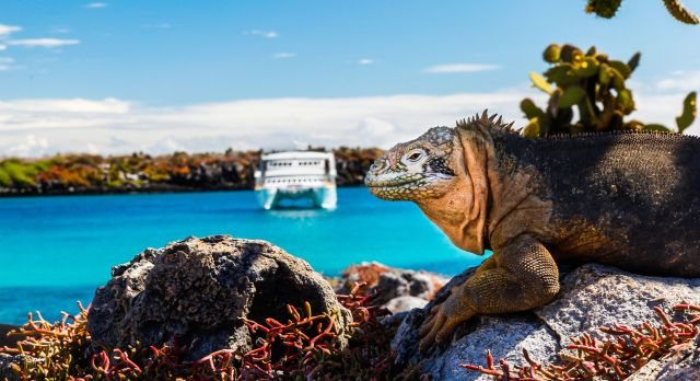 Galapagos cruise to explore the flora and fauna