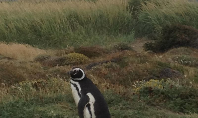 A Chilean Adventure: From Penguins to Vineyards