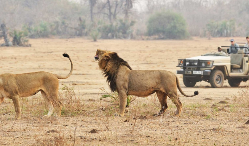 Enchanting Travels African safari parks to see