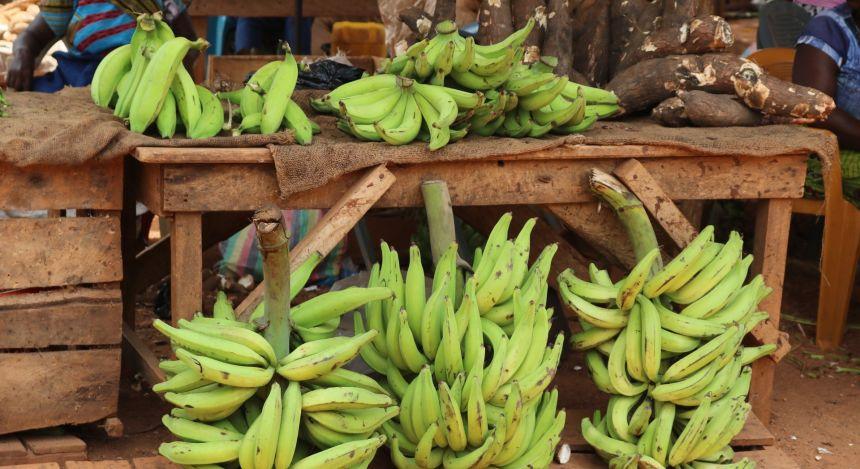 Kochbananen an einem Marktstand in Uganda