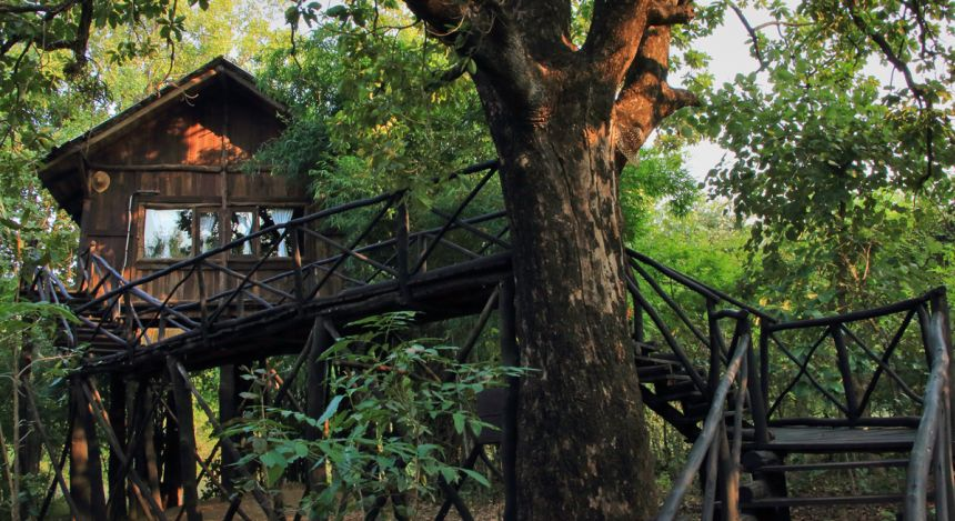 Safari in India: Treehouse hideaway Bandgavgarh