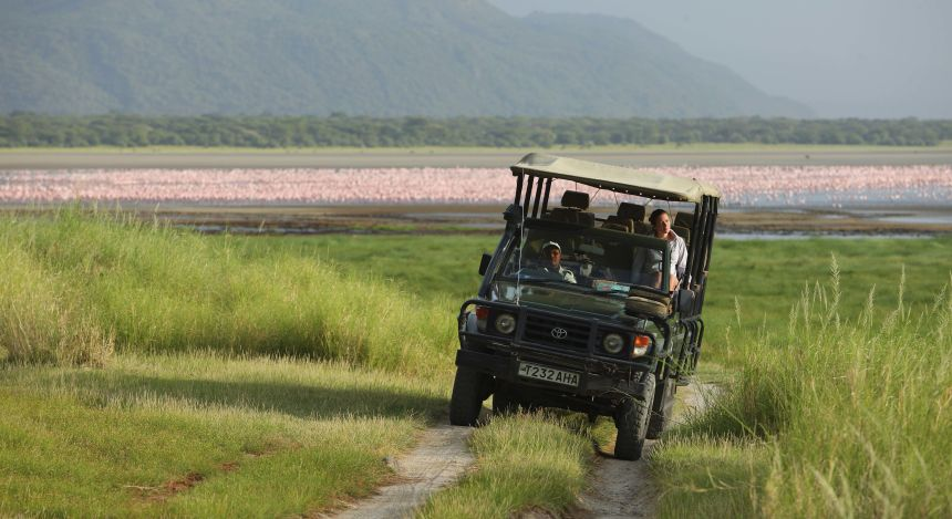 Geländewagen vor Schwarm von Flamingos