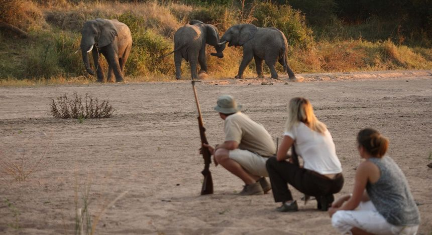 Enchanting Travels - Tanzania Tours - Ruaha Hotel - Jongomero - Get upclose and personal with walking safaris at Ruaha