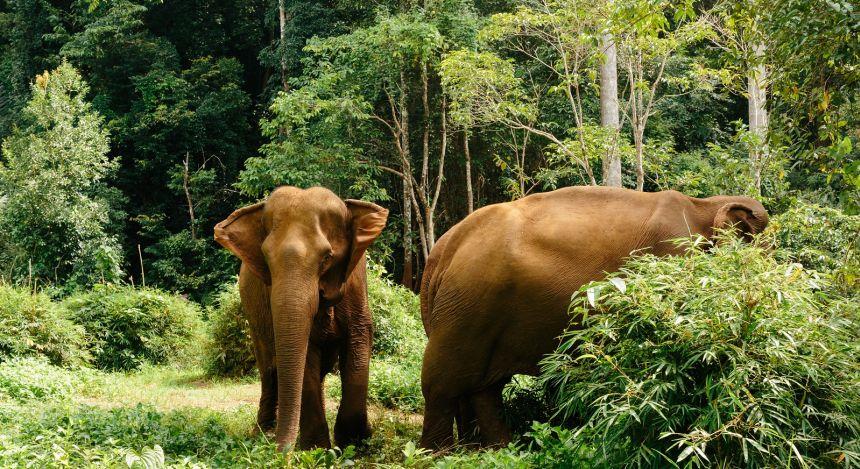 Zwei Elefanten stehen im Wald