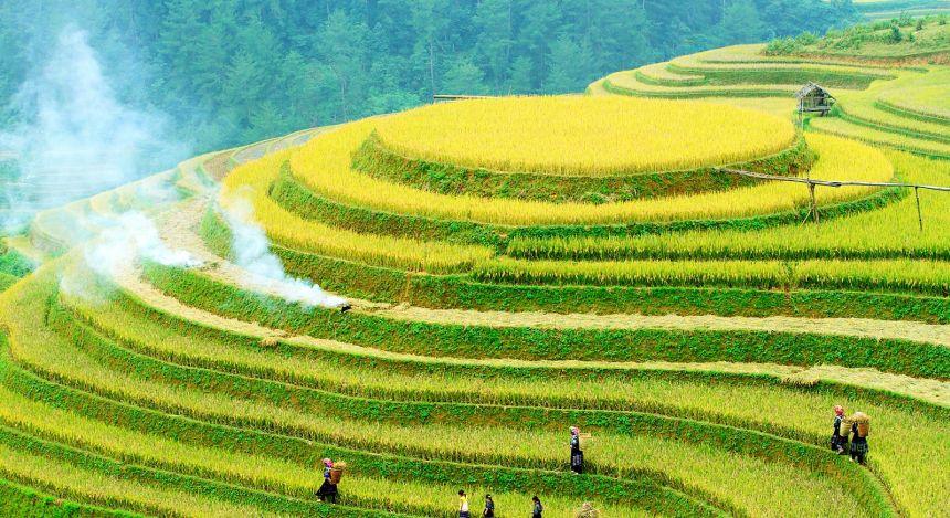 Blick auf Reisterrassen mit Reisbauern