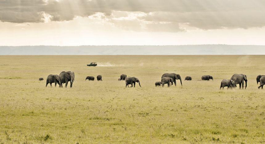 Elefantenherde in der weiten Savanne