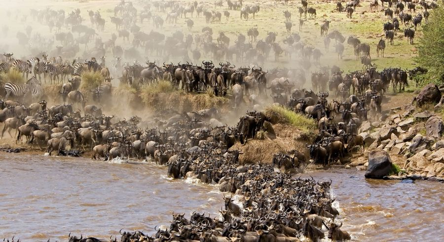 Safarireisen zur Great Migration