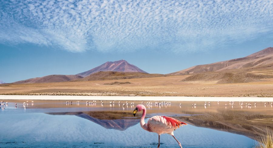 Lagune in der Uyuni Wüste mit Flamingos - das Highlight Ihrer Bolivien Reise