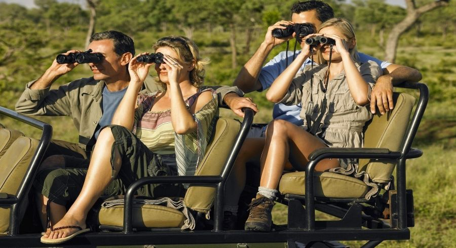Kruger: The Best South African Safari Adventures