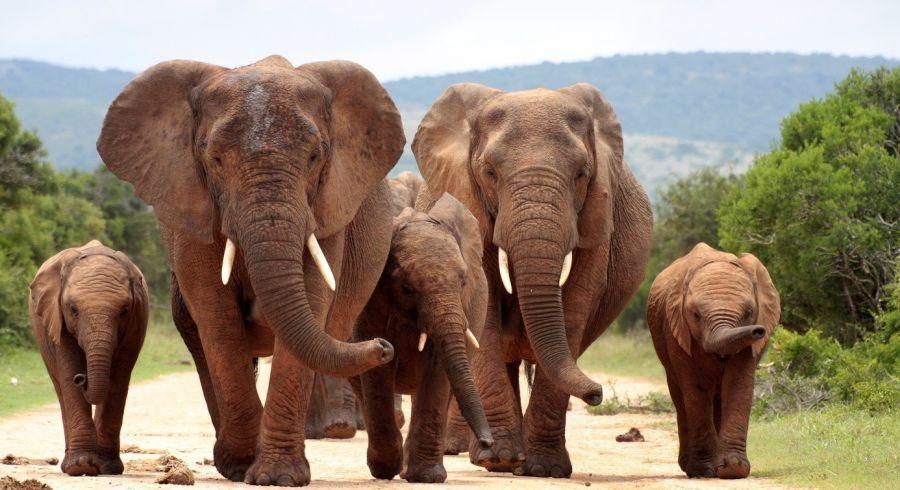 Elefanten im Addo Elephant National Park