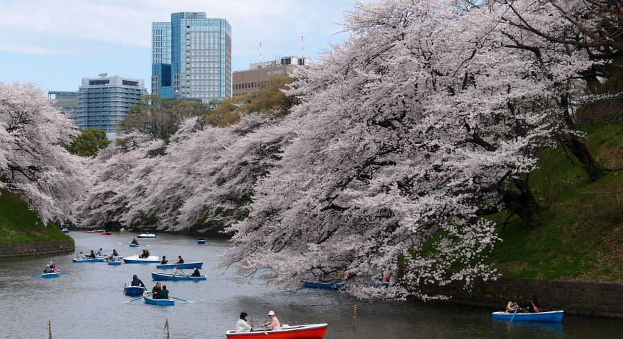 Private Japan tours
