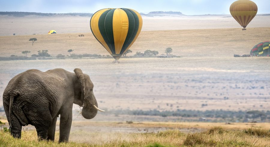Enchanting Travels Africa Tours elephant , foggy morning, hot air balloons landing on background, Masai Mara National Reserve, Kenya