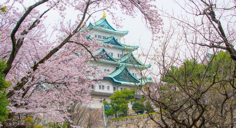 Nagoya Castle amid sakura blooms