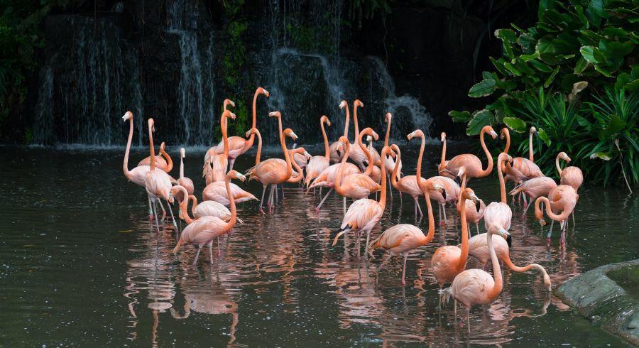 Pink flamingos at Jurong Bird Park in Singapore