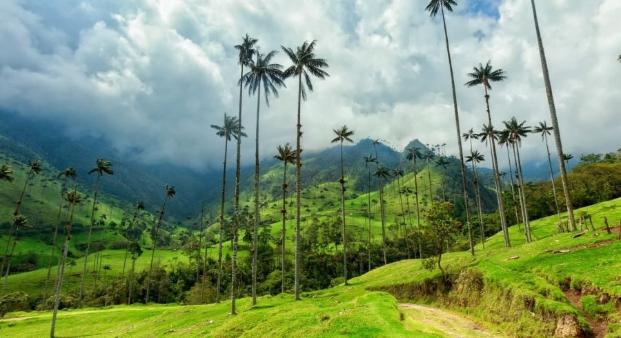 Cocora valley in the Coffee Region of Colombia