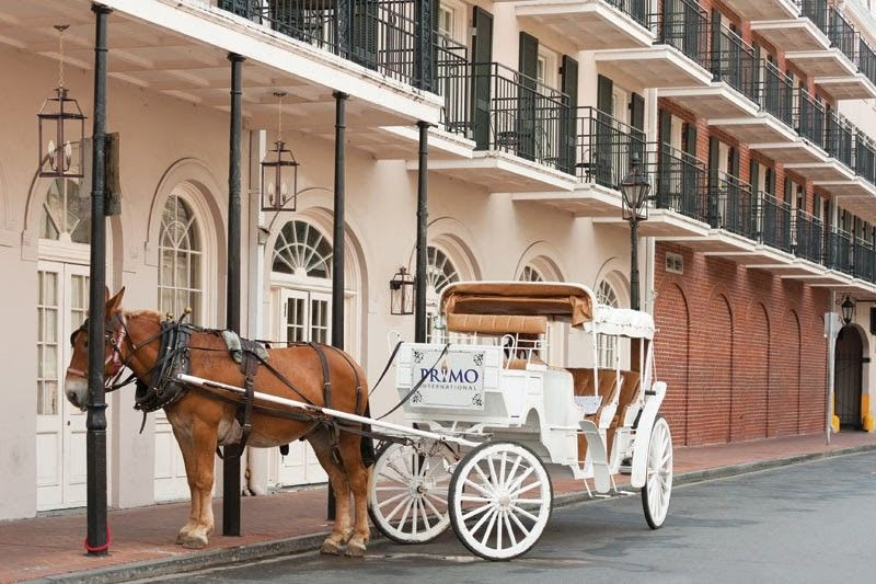 Horse & Carriage in New Orleans