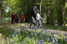 Walk Well in Taunton