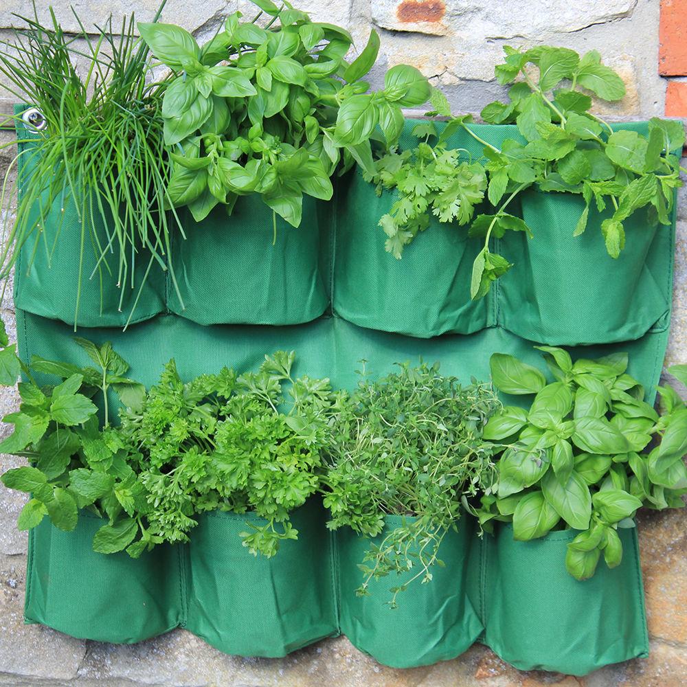 Herb Wall Planter | Haxnicks