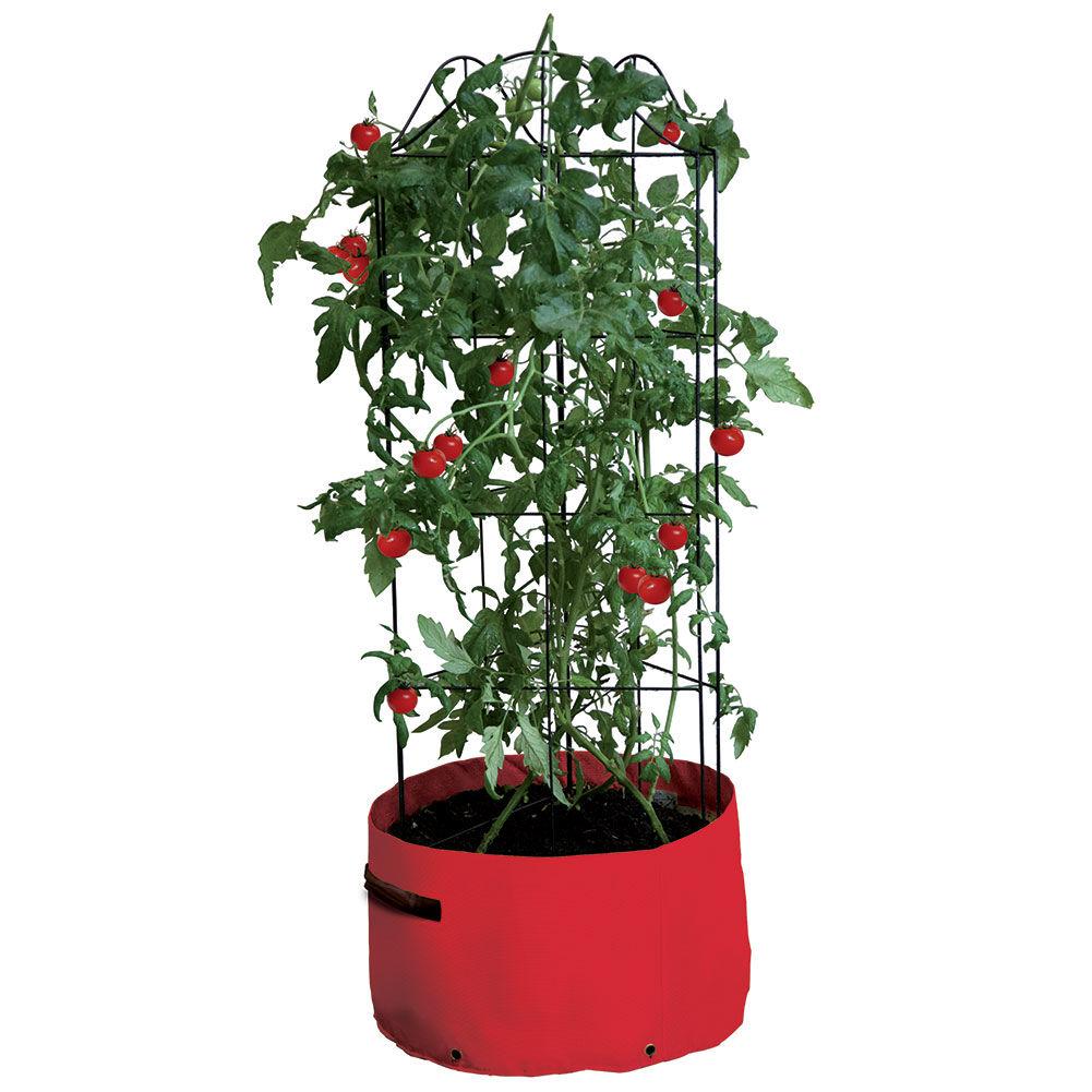 Tomato Patio Planter From Haxnicks