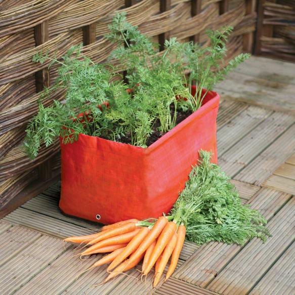 Carrot Patio Planter from Haxnicks