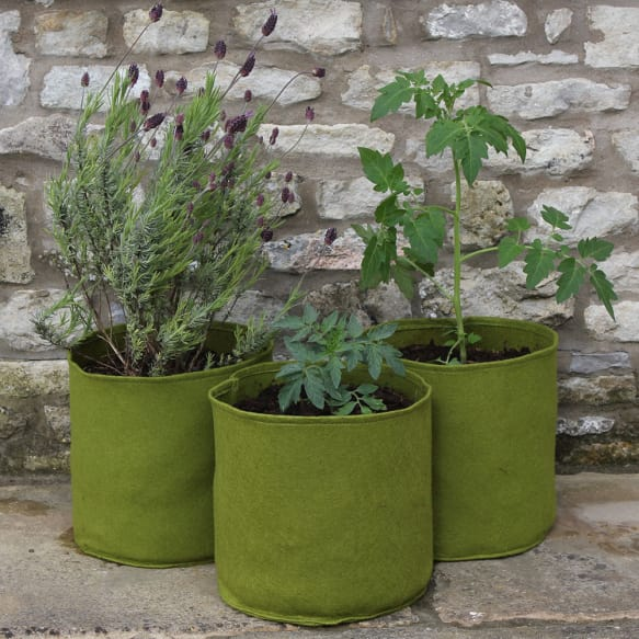 10 ltr Vigoroot Pots from Haxnicks
