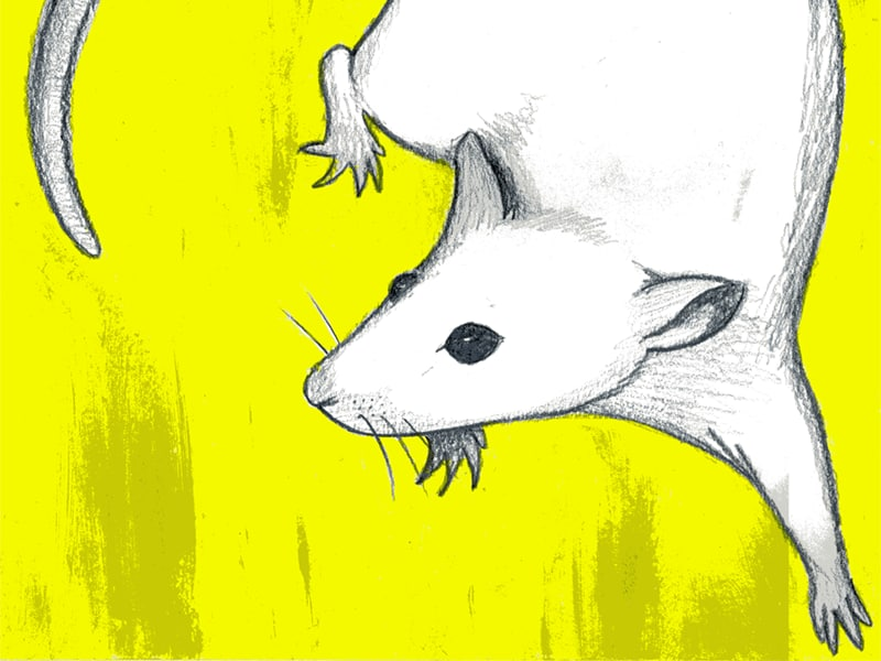 Sample from Mouse Series