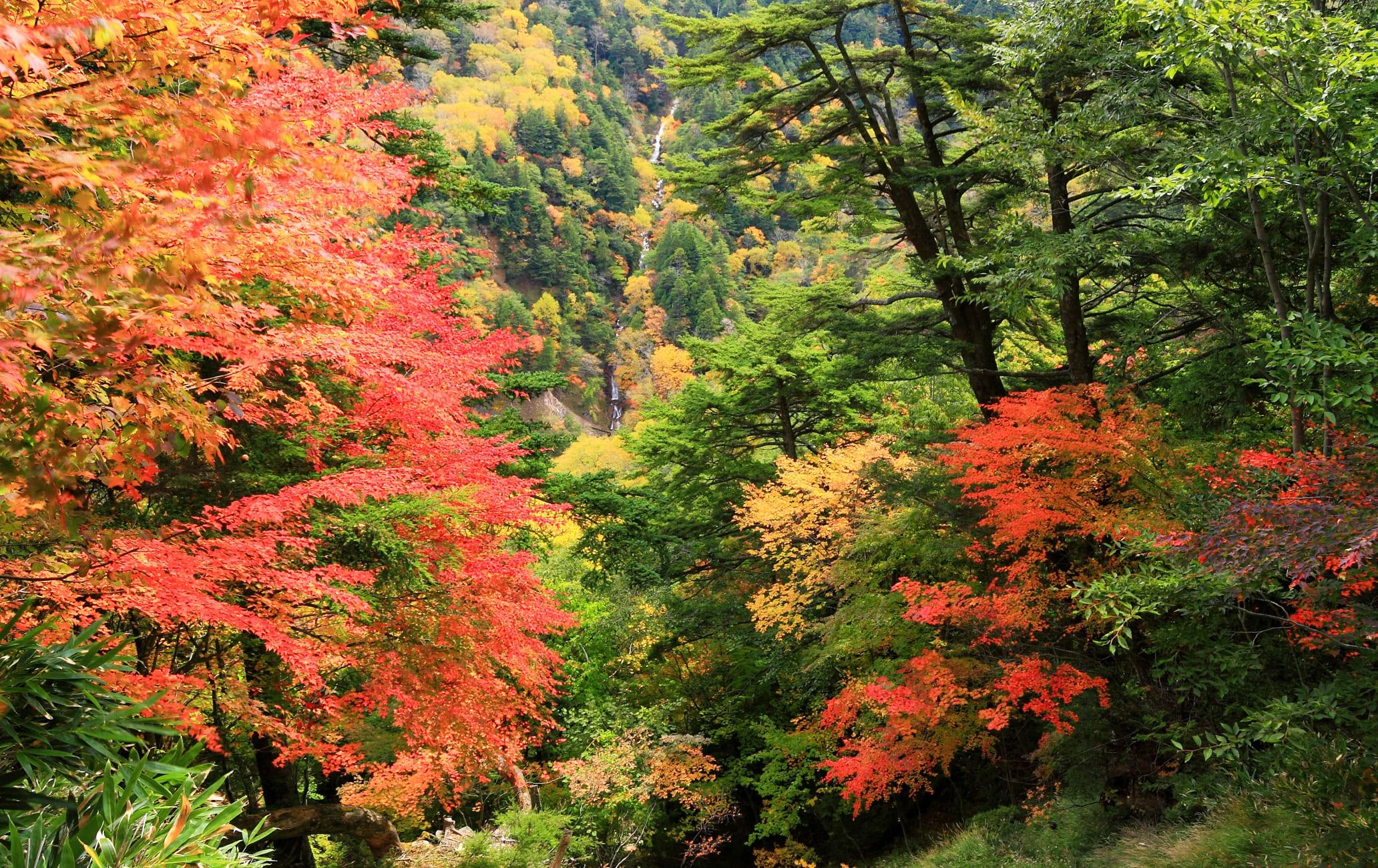 Kinugawa Onsen Oku-Kinu Area