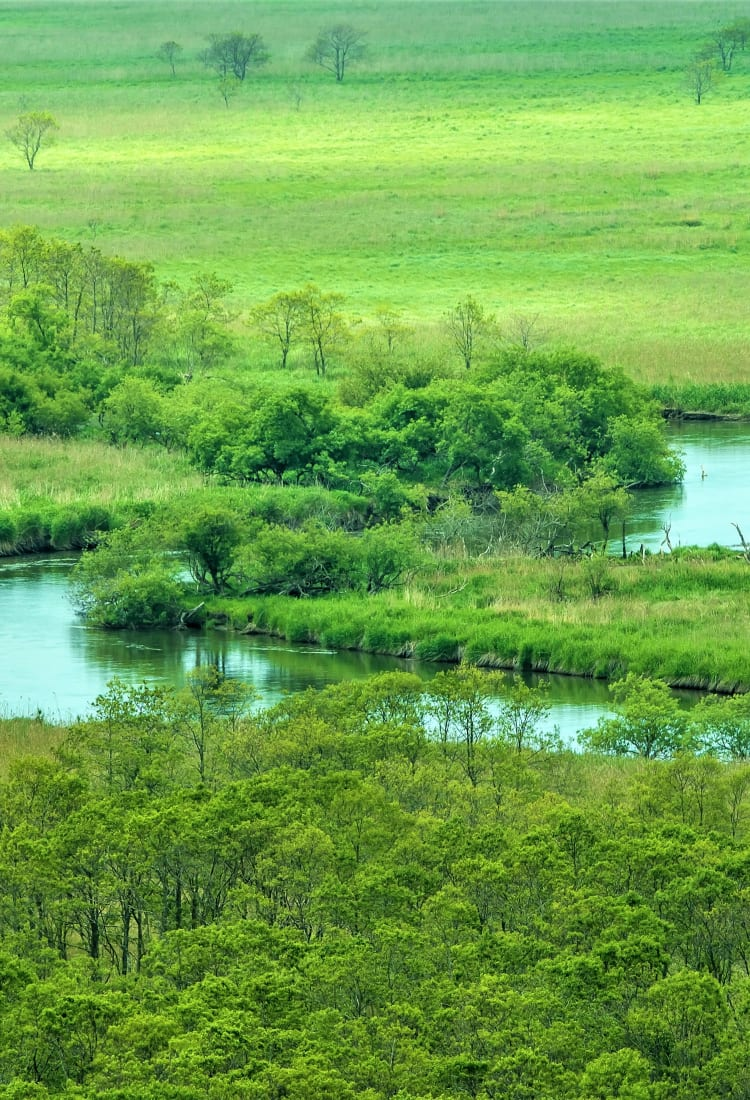 Kushiro Marsh