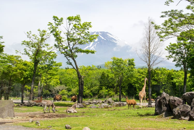Fuji Safari Park