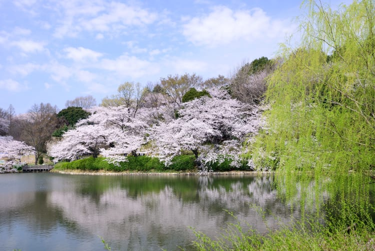 kanagawa prefectural mitsuike park