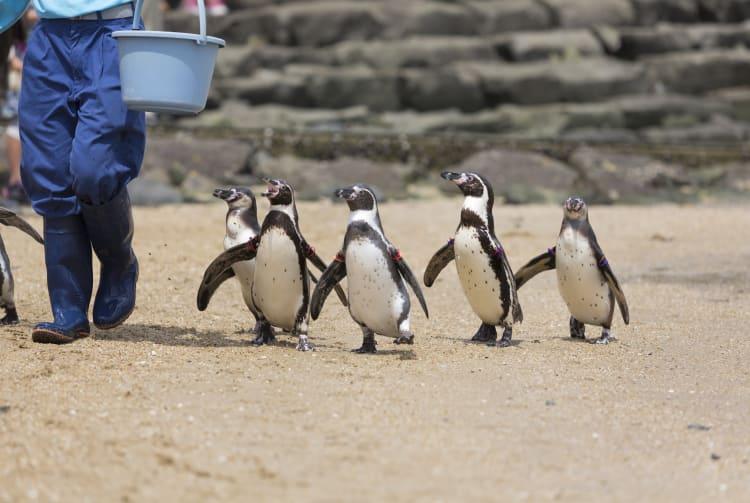 Nagasaki Penguin Aquarium