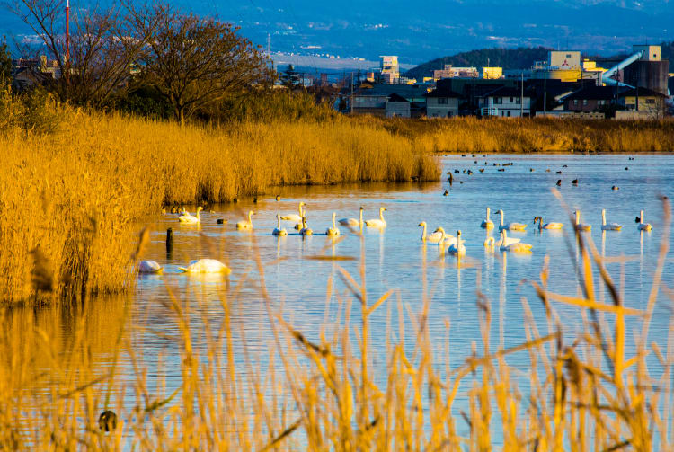 Yonago Mizutori Waterbird Park