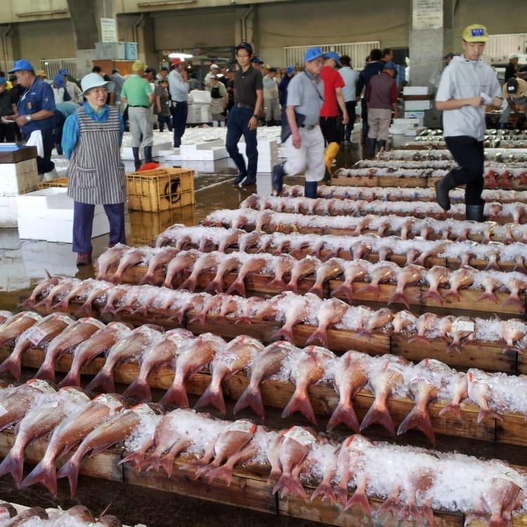 Kagoshima Fish Market Tour