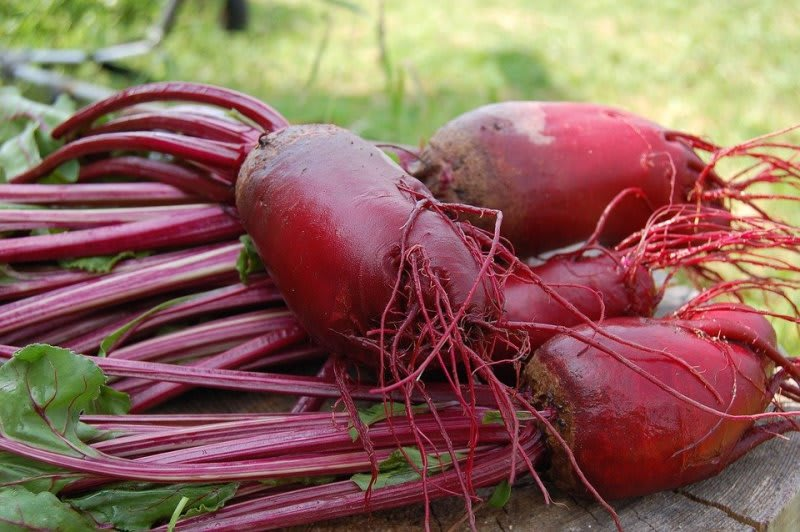 beets on a table - do beets cause diarrhea article