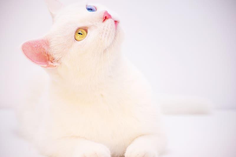 Best Hypoallergenic Cat Litter (Here's the Scoop)
