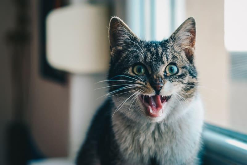 Best Cat Scratch Deterrent: Reviews Guide