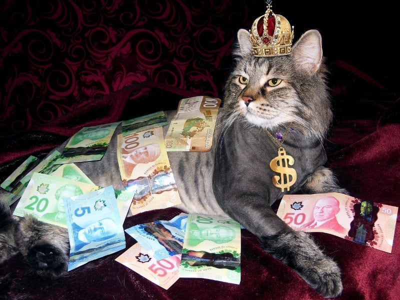 cat sitting with paper money laying around and money necklace