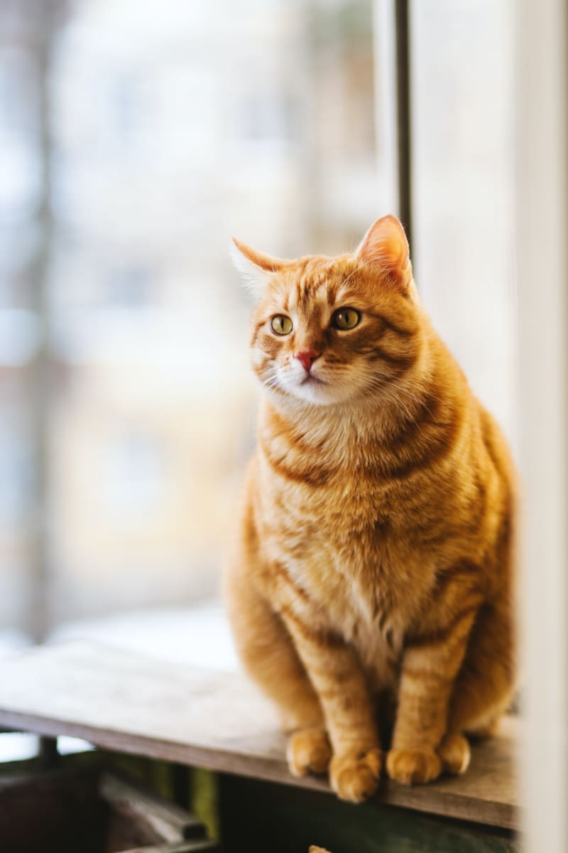 Best Litter Box for Large Cats: Buyers Guide