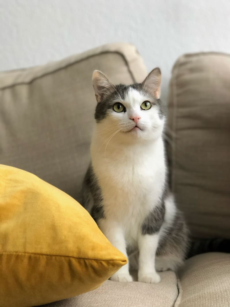 The Best Cat Scratcher : Say No to Damaged Furniture at Home