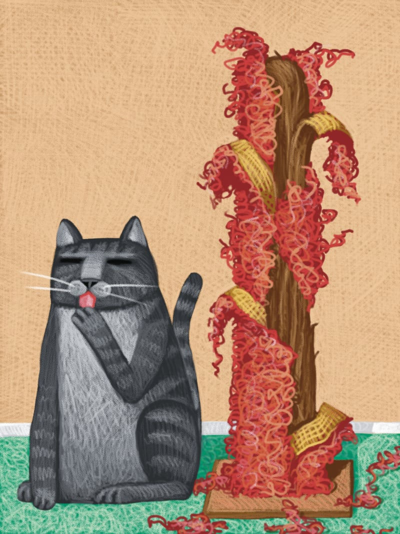Is it Safe to Buy a Used Cat Scratching Post? Know the Risks