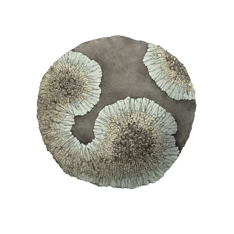 Emma Kelly, Lichen World: golden moonglow, pencil on paper, digital colour