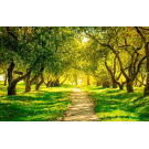 Painel Fotográfico Paisagem Bosque Verde Origini