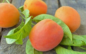 Carrot Apricot Casserole