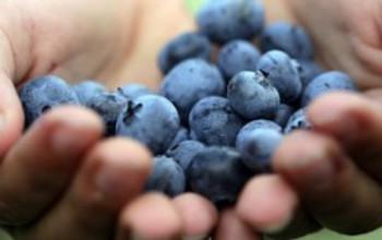 Blueberry Soup II