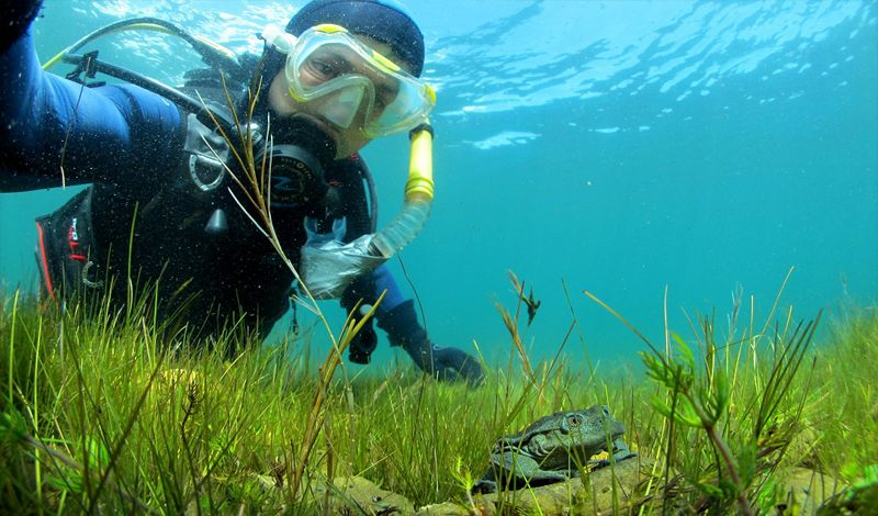 Bolivian Amphibian Initiative: Bolivia Discovery Tour: Explore Lake Titicaca and Endangered Species